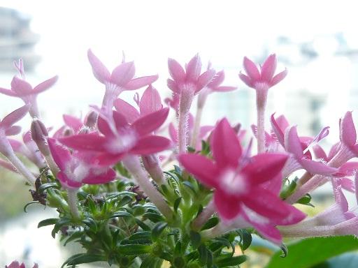 高砂の花.jpg