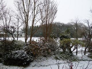 初雪2011-玄関を出たら雪だった.JPG